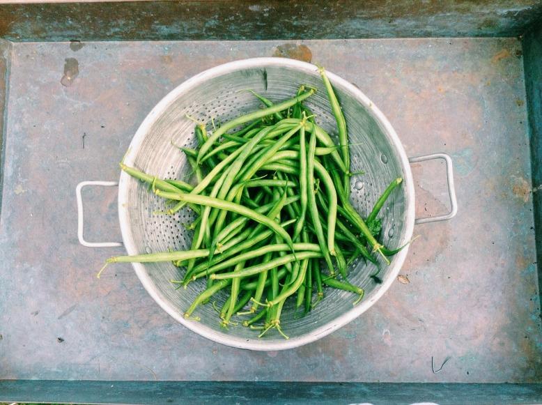 beans-598185_1280